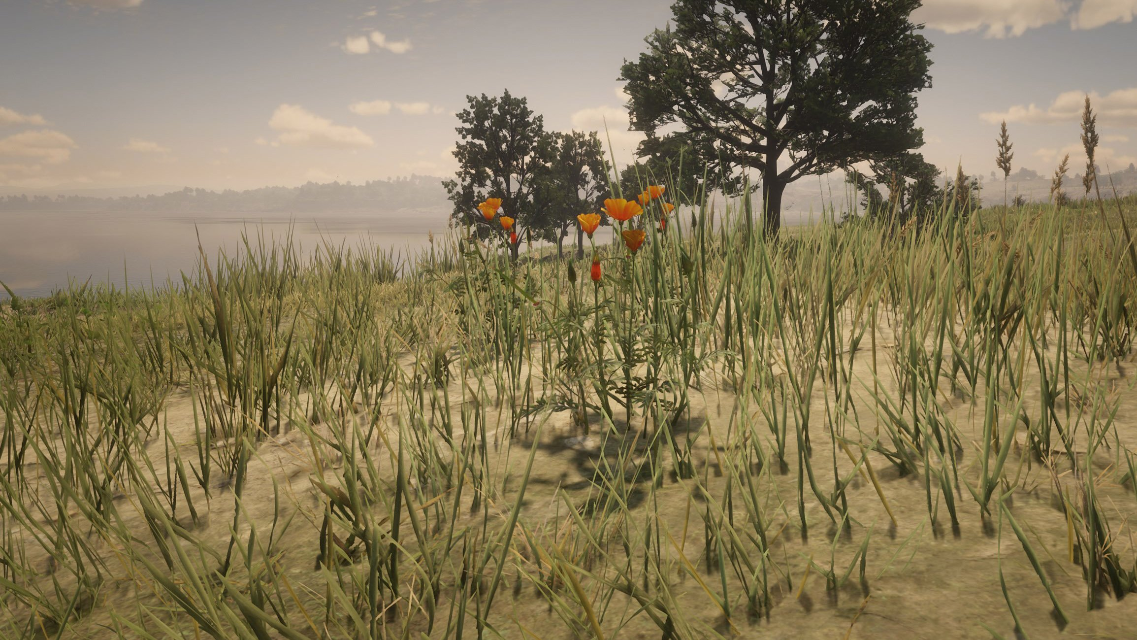 prairie-poppy-locations-red-dead-redemption-2_feature.jpg